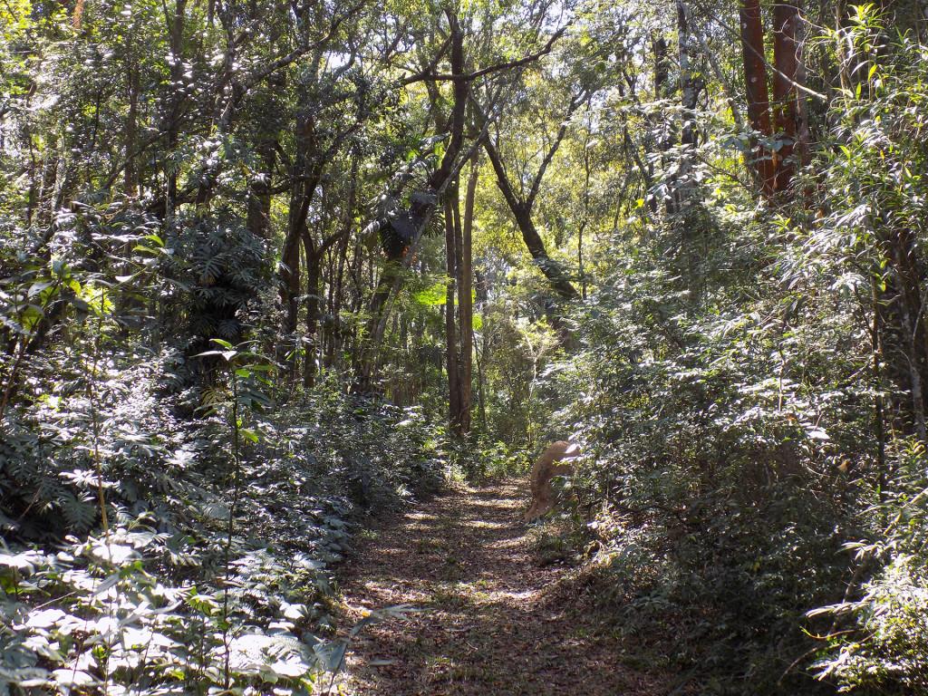 Bosque 11