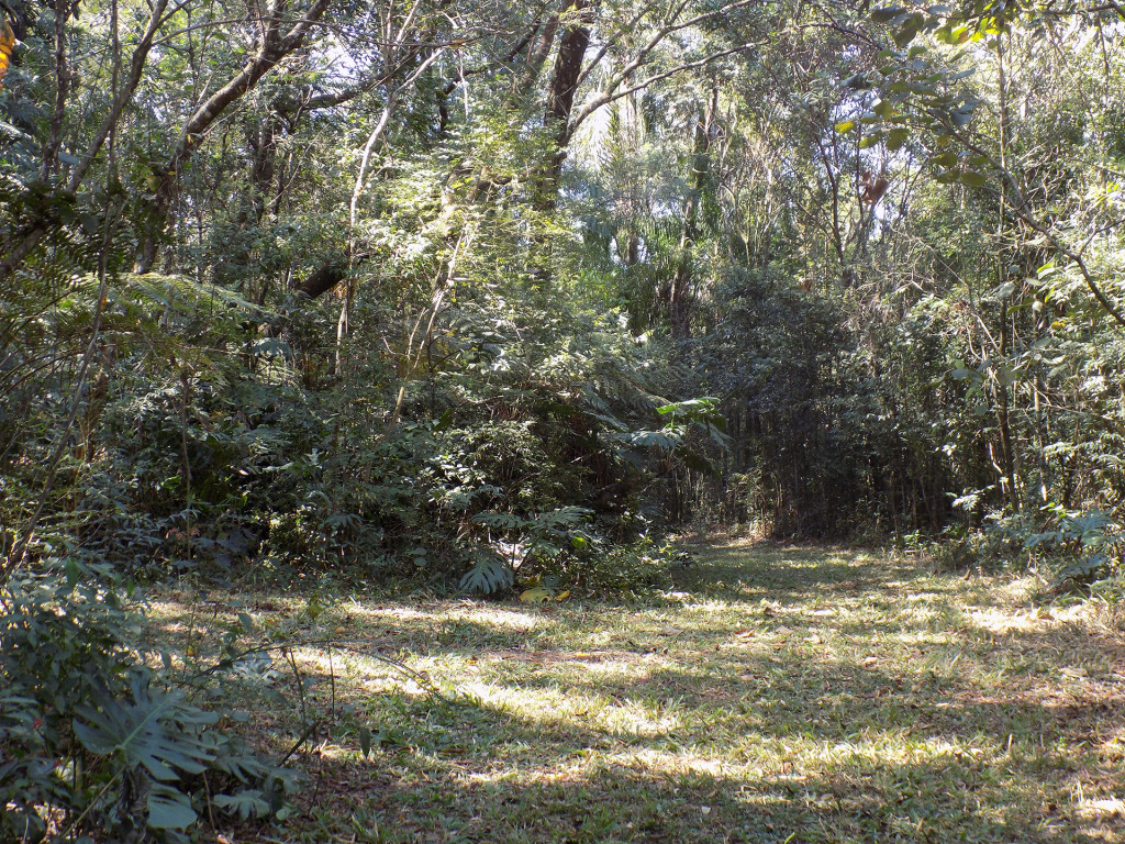 Bosque 12