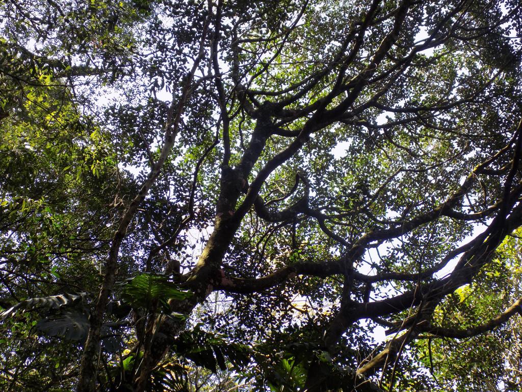 Bosque 14