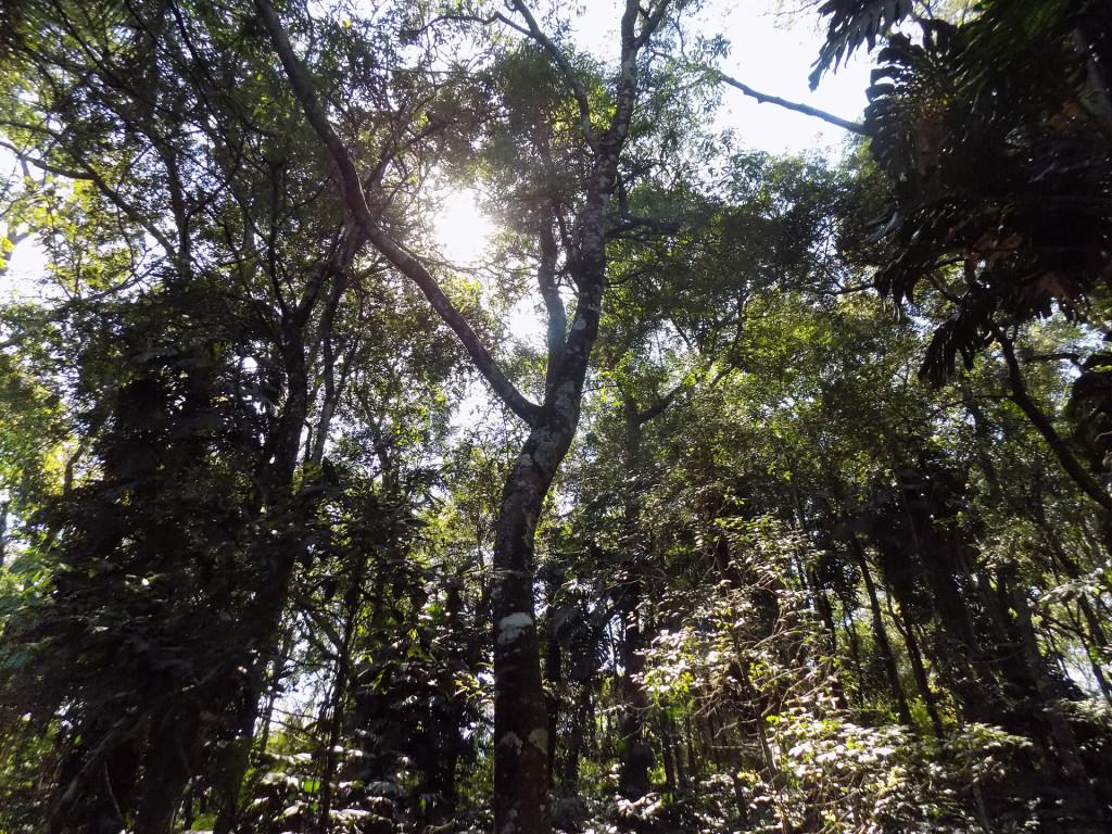 Bosque 16